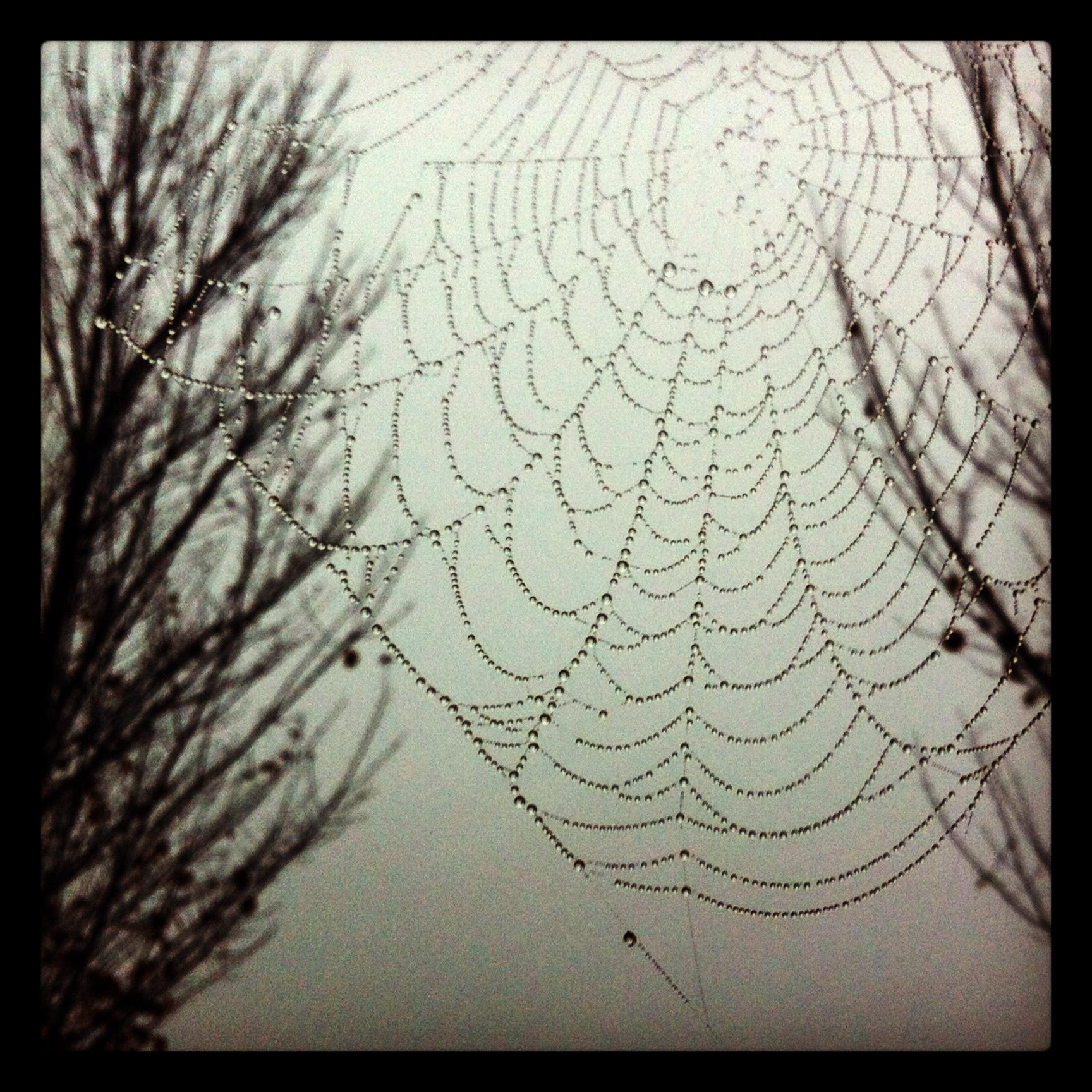 Ein Spinnennetz
